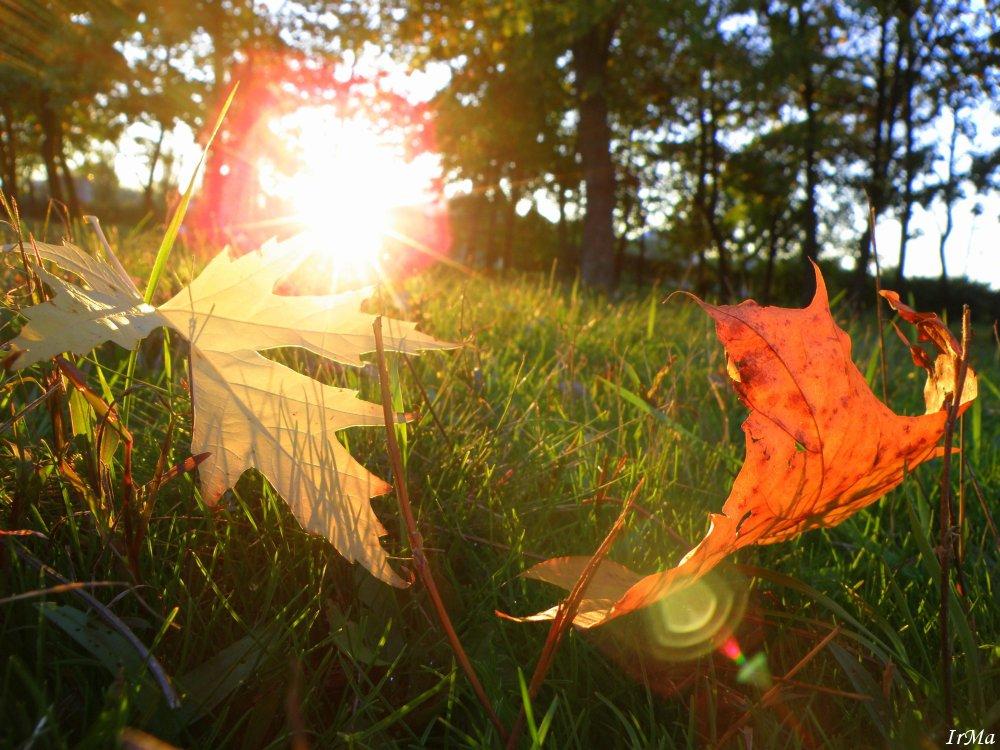 будет ли бабье лето этой осенью очарователен